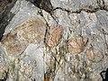 Clast-rich mixtite (Coleman Member, Gowganda Formation, Paleoproterozoic, ~2.3 Ga; Percival Lake roadcut, Ontario, Canada) 19 (47674211742).jpg