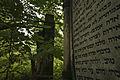 Cmentarz żydowski łódź 2.jpg