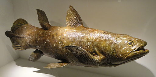 Coelacanth model, Devonian - Houston Museum of Natural Science - DSC01709