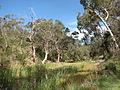 Coimadai Creek.JPG