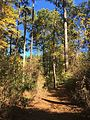 Coldwater River nature trails 5.jpg