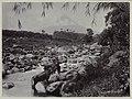 Collectie NMvWereldculturen, RV-A20-132, foto, 'Een paar karbouwen in het water bij Yogyakarta met de Merapi op de achtergrond', fotograaf Ohannes Kurkdjian, 1885-1920.jpg
