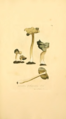 Coloured Figures of English Fungi or Mushrooms - t. 154.png