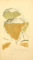 Coloured Figures of English Fungi or Mushrooms - t. 88.png