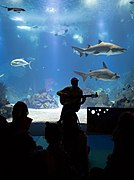 Concert for kids at the Lisbon Oceanarium, Lisbon, Portugal julesvernex2-2.jpg