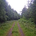 Conifer forest track in the misty dawn - geograph.org.uk - 1447645.jpg