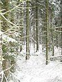 Conifers, Beards Hill - geograph.org.uk - 1639354.jpg