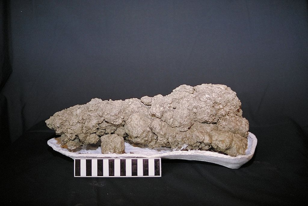 Coprolite - fossilized dinosaur poo