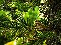 Coruja na árvore.jpg