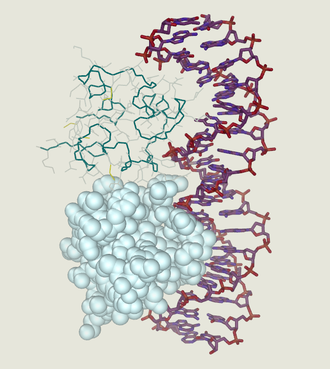 DNA-binding protein - Cro protein complex with DNA