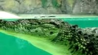File:Crocodile Facts- 19 Facts about Nile Crocodiles.webm