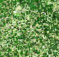 Crops Kansas AST 20010624.jpg