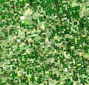 Satellite image of circular crop fields characteristic of center pivot irrigation in Haskell County, Kansas in late June 2001. Healthy, growing crops are green. Corn is growing leafy stalks, but Sorghum, which resembles corn, grows more slowly and is much smaller and therefore paler. Wheat is a brilliant gold as harvest occurs in June. Brown fields have been recently harvested and plowed under or lie fallow for the year.