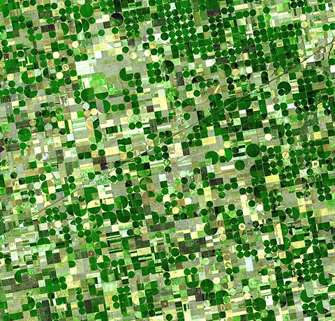 Circular irrigated crop fields in Kansas. Healthy, growing crops of corn and sorghum are green (sorghum may be slightly paler). Wheat is brilliant gold. Fields of brown have been recently harvested and plowed or have lain in fallow for the year. Crops Kansas AST 20010624.jpg