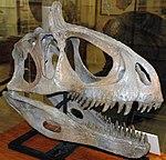 Cryolophosaurus ellioti theropod dinosaur (Hanson Formation, Lower Jurassic; Mt. Kirkpatrick, Queen Alexandra Range, Transantarctic Mountains, Antarctica) 2 (15372992601).jpg