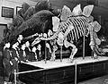 Cub Scouts View the Stegosaurus (8722701919).jpg