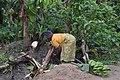 Cultivatrice camerounaise8.jpg