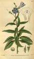 Curtis's Botanical Magazine, Plate 3104 (Volume 58, 1831).png