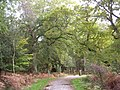 Cycle path leaving the Hursthill Inclosure, New Forest - geograph.org.uk - 71605.jpg