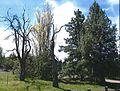 Cyrus Homestead nom03 - Crooked River NG Oregon.jpg