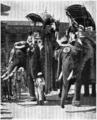 D197- éléphants royaux -liv2-ch12.png