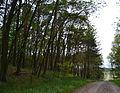 DEU-BB-MOL-Garzau-LSG Naturpark Märkische Schweiz - 07.JPG