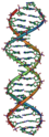 DNA Overview2.png
