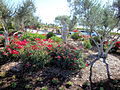 DSC24894, Viansa Vineyards & Winery, Sonoma Valley, California, USA (4430085646).jpg