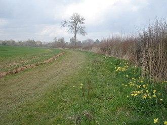 Dymock Woods SSSI - Daffodil Way approaching Dymock