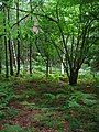 Dallington Forest - geograph.org.uk - 505810.jpg