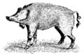 Darwin Domestic 104.png
