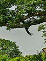 Daulatabad Fort, Aurangabad - panoramio (86).jpg