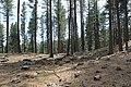 Davis Creek Park - panoramio (20).jpg