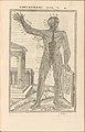 De dissectione partium corporis humani libri tres MET DP257840.jpg