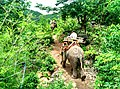Dedoke Waterfall Elephant Camp 02.jpg