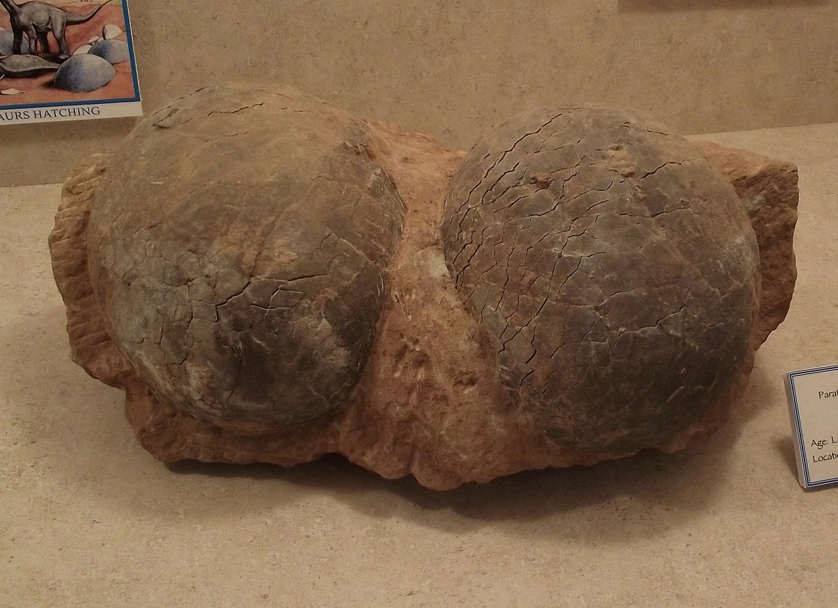 Image result for titanosaur egg size