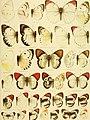 Die Gross-Schmetterlinge der Erde - eine systematische Bearbeitung der bis jetzt bekannten Gross-Schmetterlinge (1900) (14800992853).jpg