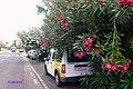 Die schönsten Parkplätze von Puerto de la Cruz ,-) - panoramio.jpg