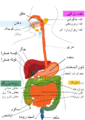 Digestive system diagram fa language.png