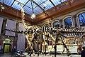 Dinosaur Hall, Berlin Natural History Museum (3) (40183873511).jpg