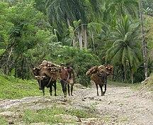 Kuba-Ekonomi-Fil:DirkvdM baracoa wood-gatherers