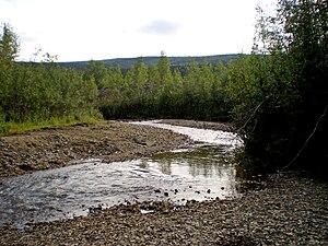 Bonanza Creek - Discovery Claim on Bonanza Creek, August 2009