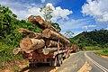 District-Tawau Sabah Logging-Trucks-01.jpg