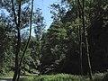 Divoká Šárka - panoramio (35).jpg