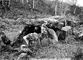 Dolmen de la Contrie du Rocher - Ernée - Médiathèque de l'architecture et du patrimoine - APMH00008313.jpg