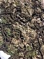Dornbirn-disapered field mouses passages-02ASD.jpg