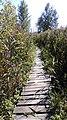 Dragoman marsh, Bulgaria 01.jpg