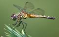 Dragonfly ran-384.jpg