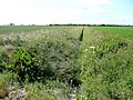 Drain south of Eastern Road - geograph.org.uk - 1398031.jpg