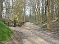 Driveway in Golden Valley Park - geograph.org.uk - 1805376.jpg